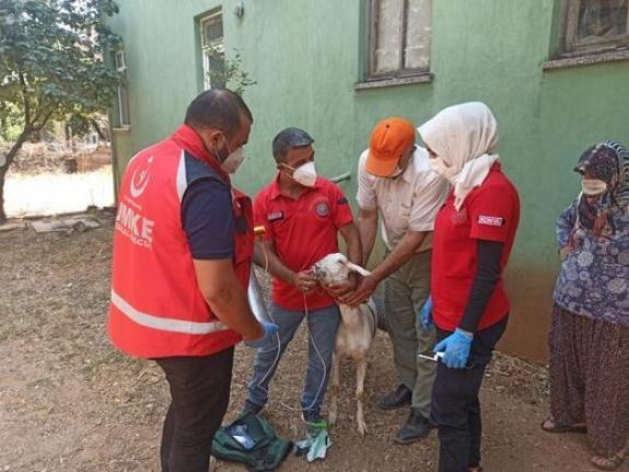 Yangından etkilenen keçilere UMKE ekipleri müdahale etti