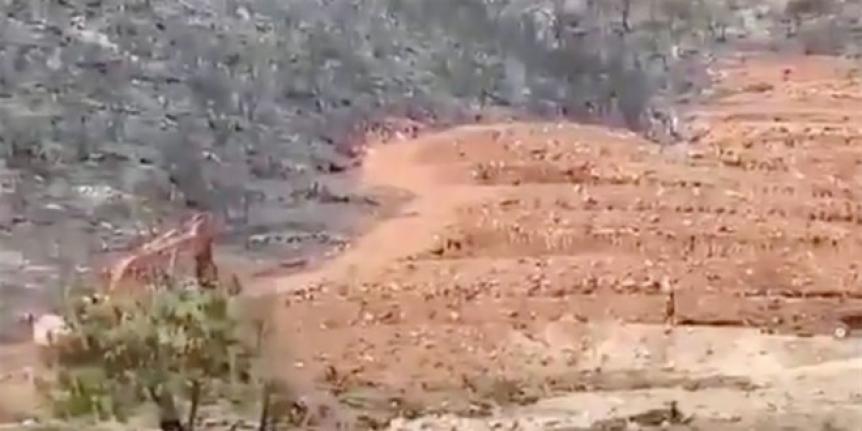 Yanan ormanda kepçe ile inşaat başladı! OGM'den açıklama geldi
