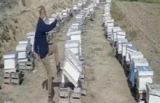 Hemşire Kızına boşanma davası açan damadının arı kovanlarını parçaladı