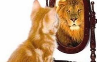 Sözleşmeli Yöneticilik ve  Kralcıkları