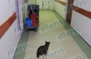 Kedi Yoğun Bakım Ünitesinin Önünde Bekliyor
