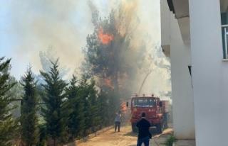Hastane ve yerleşim alanı yakınında orman yangın