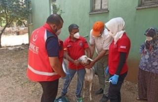 Yangından etkilenen keçilere UMKE ekipleri müdahale...