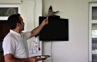 Sağlık çalışanı, televizyonun üstüne yuva...