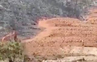 Yanan ormanda kepçe ile inşaat başladı! OGM'den...