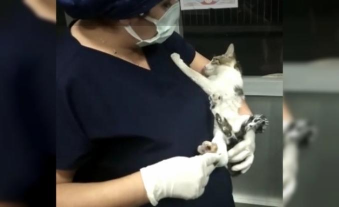 Kırık ayağı ile hastaneye gelen kediye yardım